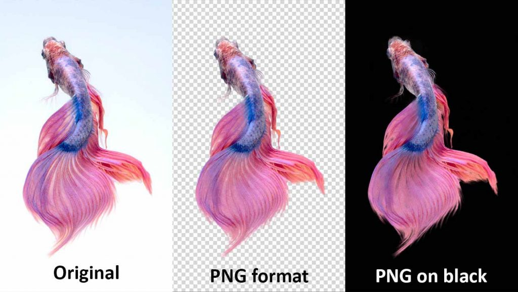 PNG - 8 File formats