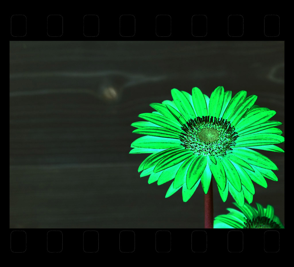 Convert Negatives to digital Images