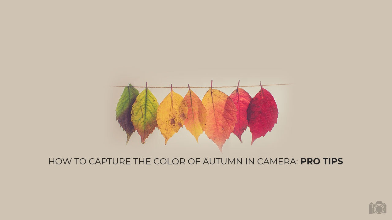 How to Capture the Color of Autumn in Camera