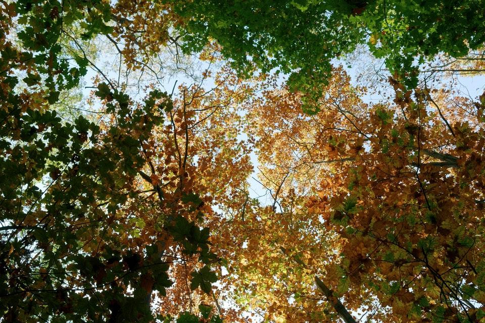Wilderness of autumn - Autumn Photography tips