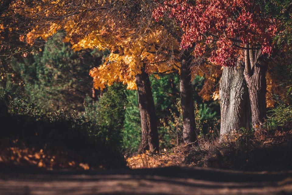 Portrait of Autumn - Autumn Photography tips