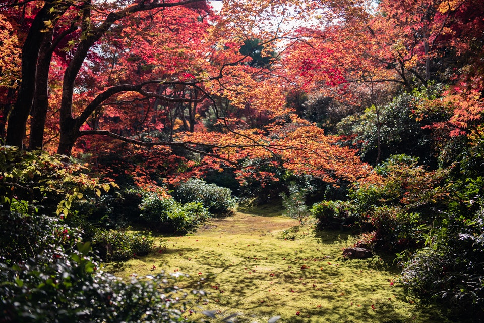 Autumn photography - Autumn Photography tips