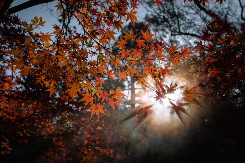 Sun rays through tree - Autumn Photography tips