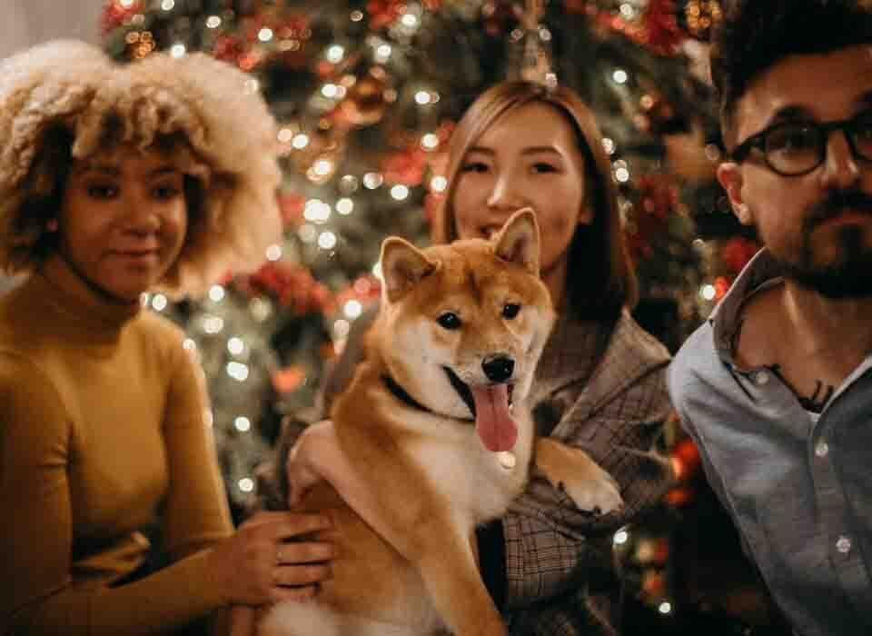 edit pets with christmas image
