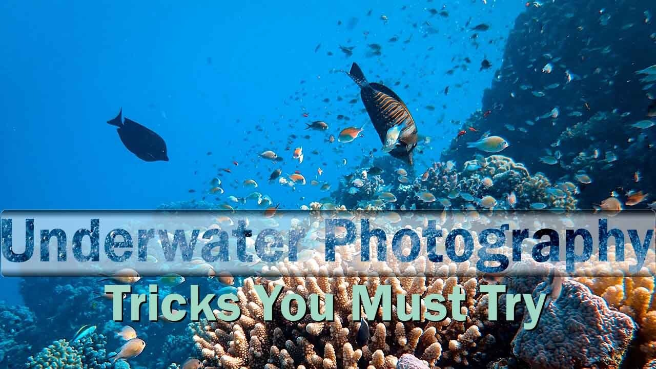 7 Underwater Photography Tricks You Must Try